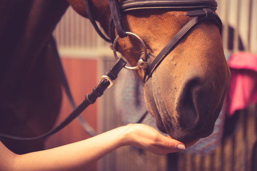 The Benefits of Equine Therapy