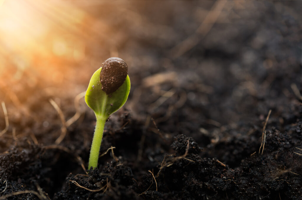 Planting the Seed of Sobriety